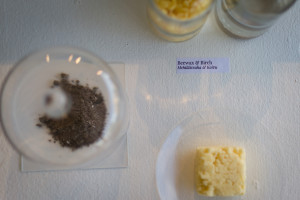 Beewax + Birch ashes